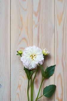 Tendre nature morte avec un oeillet blanc pour la fête des mères ou un mariage dans un style vintage