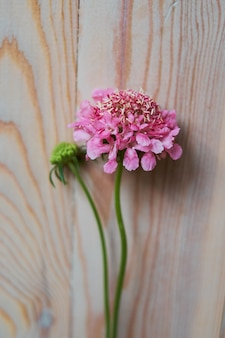 Tendre nature morte avec un oeillet rose pour la fête des mères ou un mariage dans un style vintage