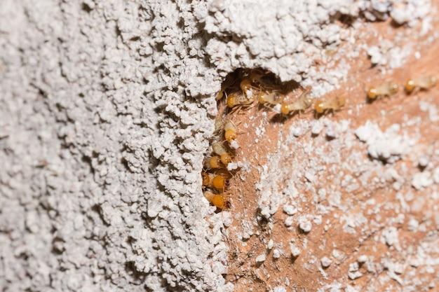 Les termites macros marchent sur les bûches.