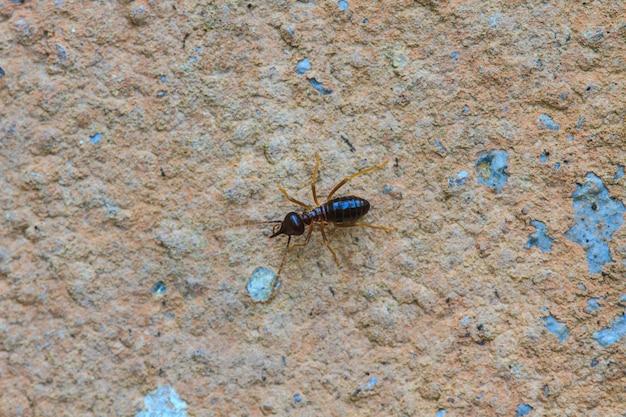 Termites mangeant la maison