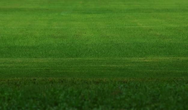 Terrain de football avec de l'herbe verte