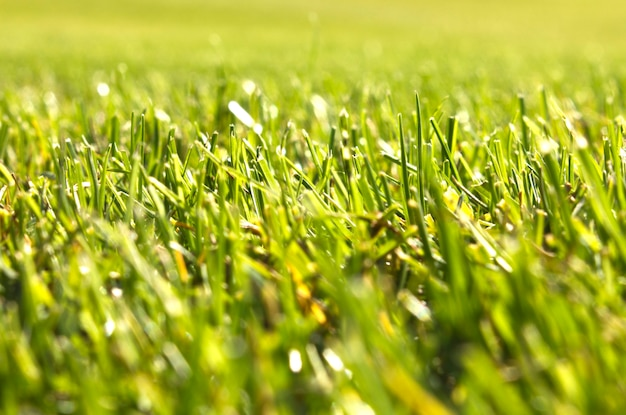 Terrain de golf à belek. herbe verte sur le terrain.