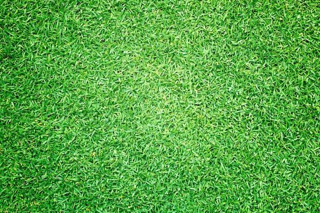 Terrain de golf pelouse verte