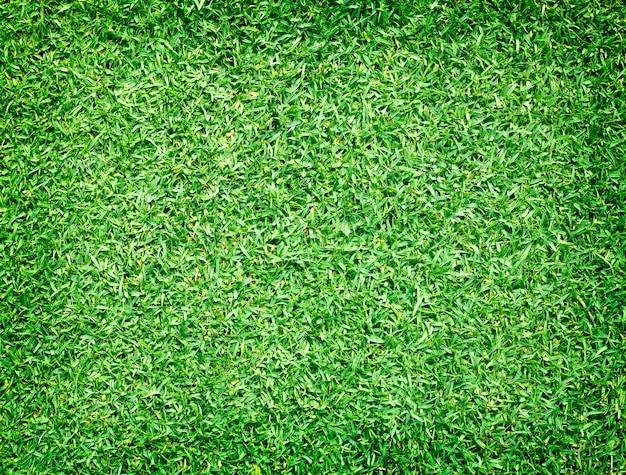Terrains de golf vert pelouse