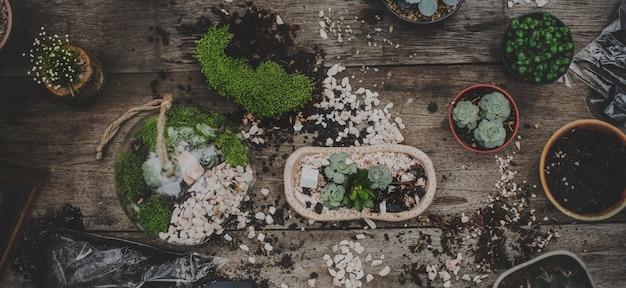 Terrarium jardin des plantes sur la table