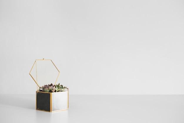 Terrarium avec plante en fond blanc