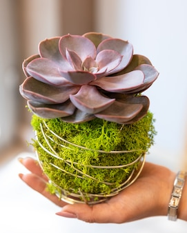 Terrarium succulent sur le gros plan de la main