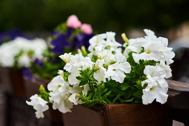 Terrasse café décore avec des fleurs blanches, gros plan