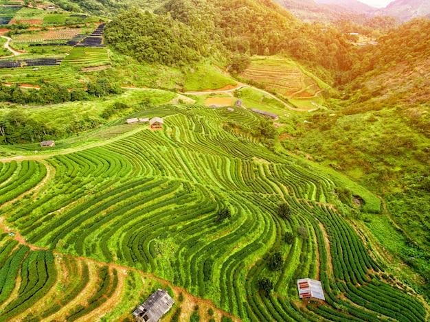 Terrasse de plantation de thé dans les highlands
