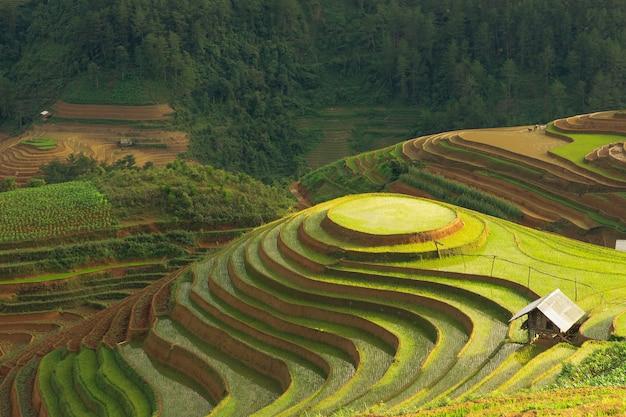 Terrasses de riz