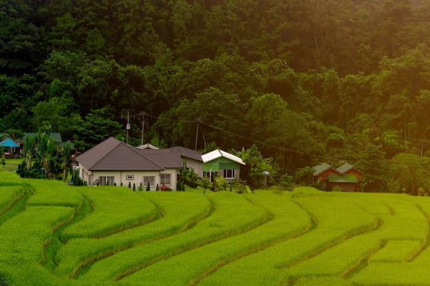 Terrasses de rizières à mae klang luang, chez l'habitant à chiang mai, thaïlande
