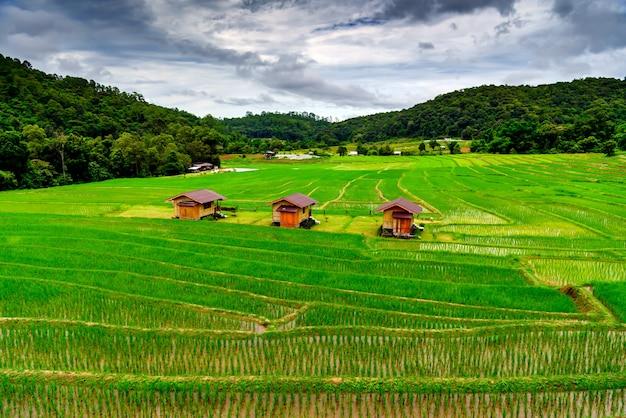 Terrasses de rizières à mae klang luang homestay chiangmai thaïlande