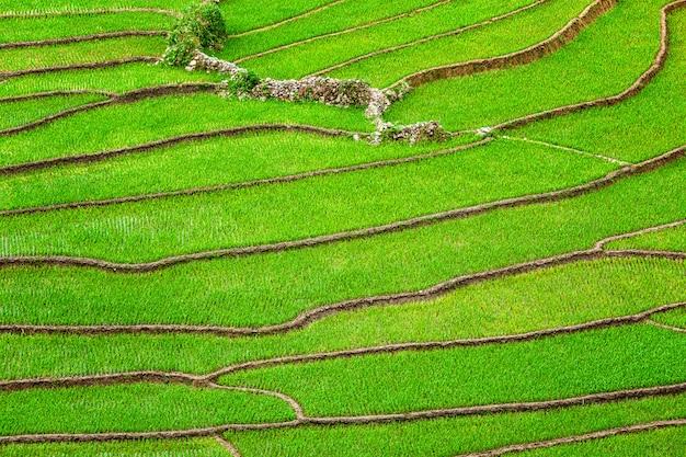 Terrasses de rizières