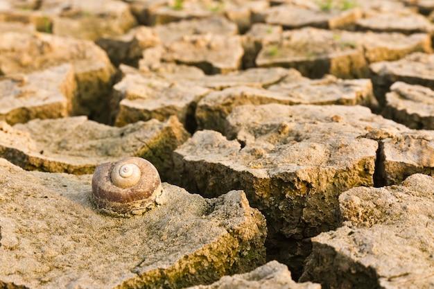 Terre fissurée avec un escargot mort, métaphorique pour le changement climatique et le réchauffement climatique.