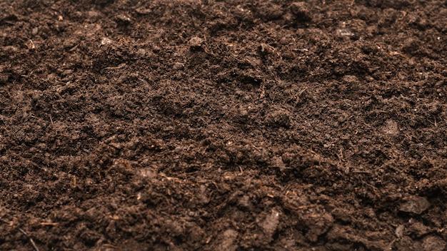 Terre noire pour fond de plante. vue de dessus.