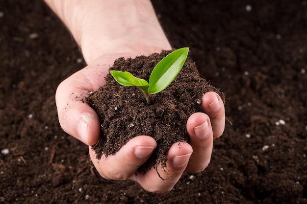 Terre avec pousse dans les mains