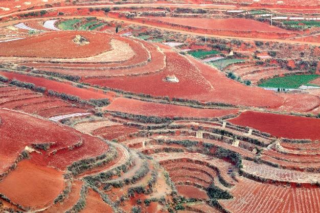 Terre rouge cultivant des légumes à dong chuan, chine