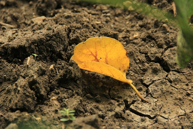 Terre sèche de feuille jaune