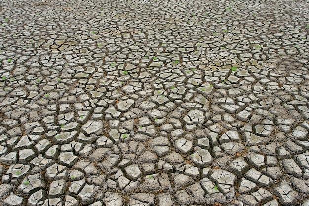 Terre sèche fissurée sans eau.