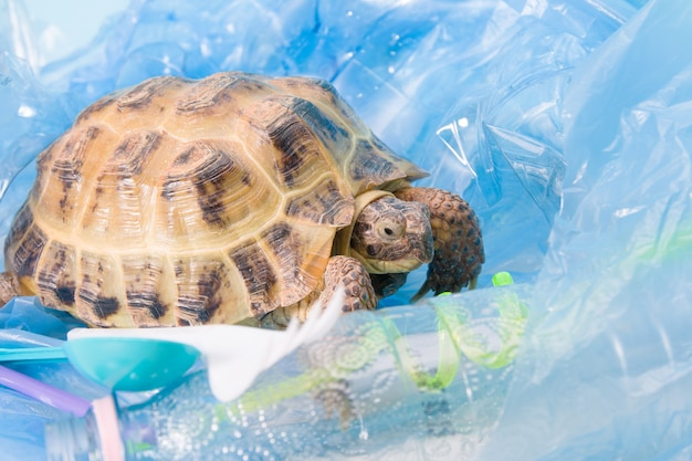 Terre tortue d'asie centrale dans un tas de déchets plastiques