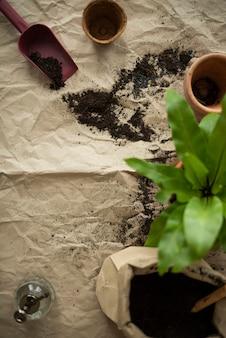 Terreau de plante d'intérieur pour l'empotage de plantes