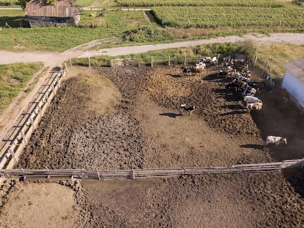 Terres agricoles agricoles avec aire d'alimentation pour les vaches. vue aérienne du drone. paysage avec ferme d'animaux.