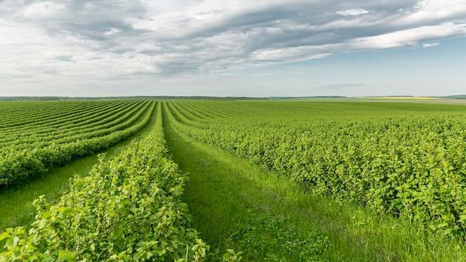Terres agricoles à angle élevé à la campagne