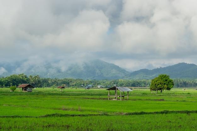 Terres agricoles et cabane de personnes dans la campagne en thaïlande