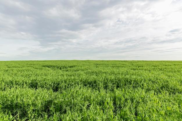 Terres agricoles à la campagne