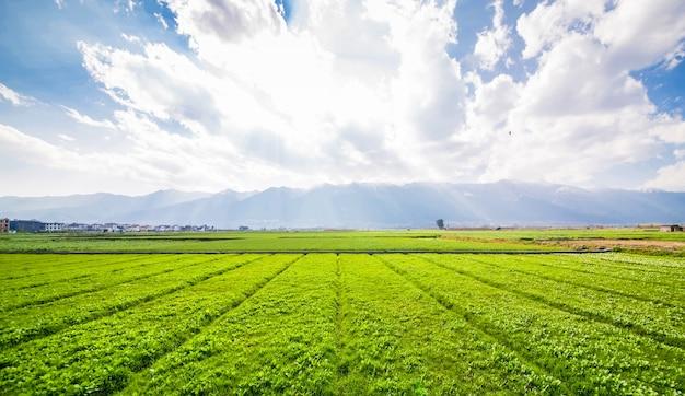 Les terres agricoles