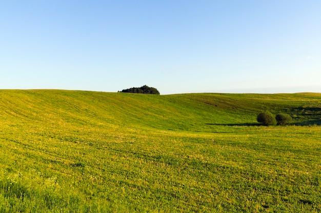 Territoire vallonné au coucher du soleil avec de l'herbe verte, le sol pousse des arbres, paysage d'été avec ciel