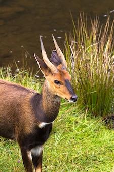 Tête d'antilope close up kenya afrique
