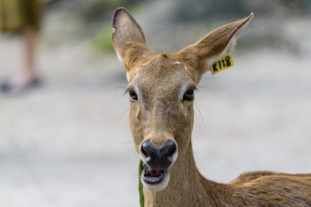 Tête d'antilope à la lumière du jour