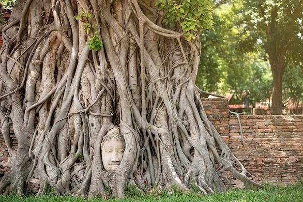 Tête de bouddha antique avec l'arbre des racines au temple mahathat ayutthaya thaïlande