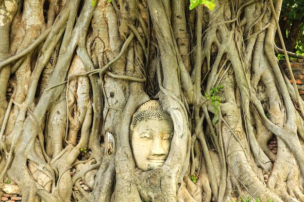 Tête de bouddha antique dans les racines des arbres au wat mahathat dans le parc historique d'ayutthaya, thaïlande.