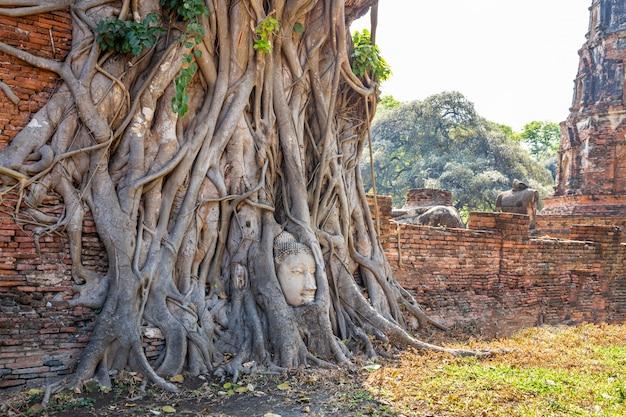 Tête de bouddha dans les racines des arbres au temple wat mahathat ayutthaya thaïlande