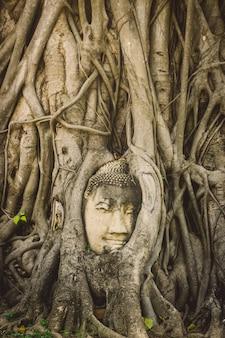 Tête de bouddha en pierre entourée de racines d'arbres dans le temple wat prha mahathat à ayutthaya, thaïlande