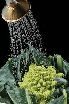 Tête de brocoli romanesco frais sous jet d'eau