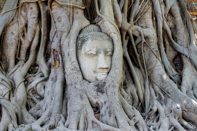 Tête budda dans les racines des arbres en thaïlande