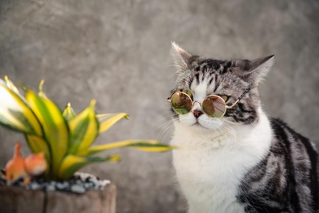 Tête de chat tigré porter des lunettes avec un cactus dans un pot d'argile de verdure