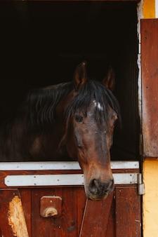 Tête de cheval dans l'écurie