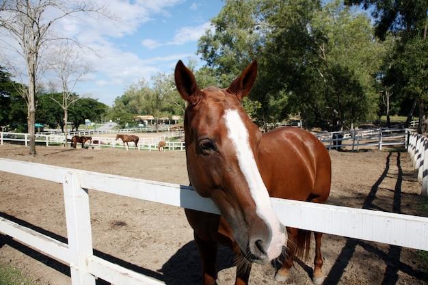 Tête de cheval derrière une clôture