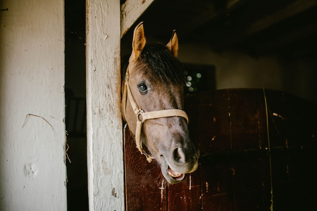 Tête de cheval mâchant du foin