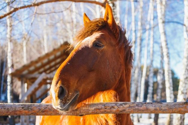 Tête de cheval par une journée ensoleillée