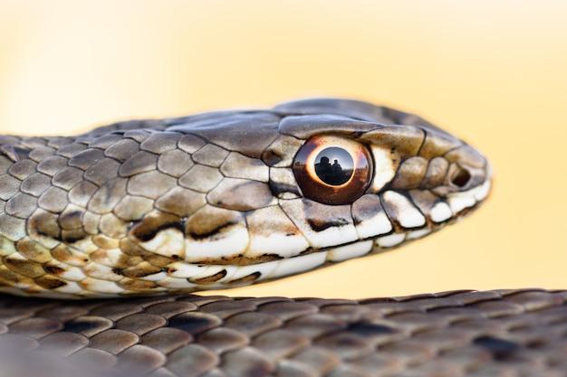Tête de femme montpellier serpent en nautre