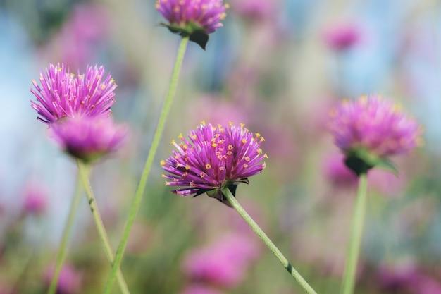 Tête de fleur avec belle en hiver au ciel.