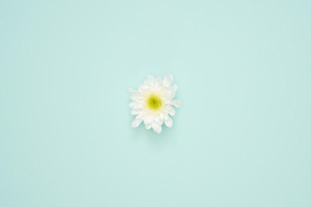 Tête de fleur