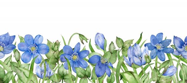 En-tête de fleurs hepatica. illustration aquarelle dessinée à la main. bannière de fleur bleue de printemps.