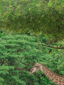 La tête d'une girafe et d'un arbre