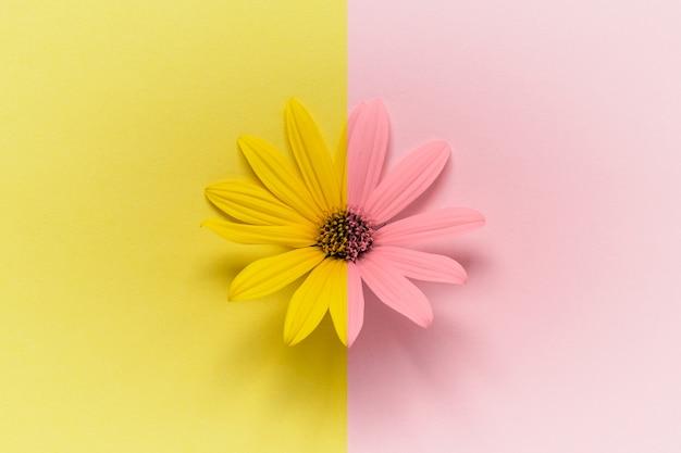 Tête de marguerite sur rose jaune